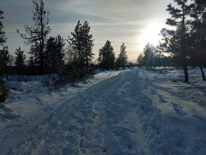 Perfect fat biking trail!