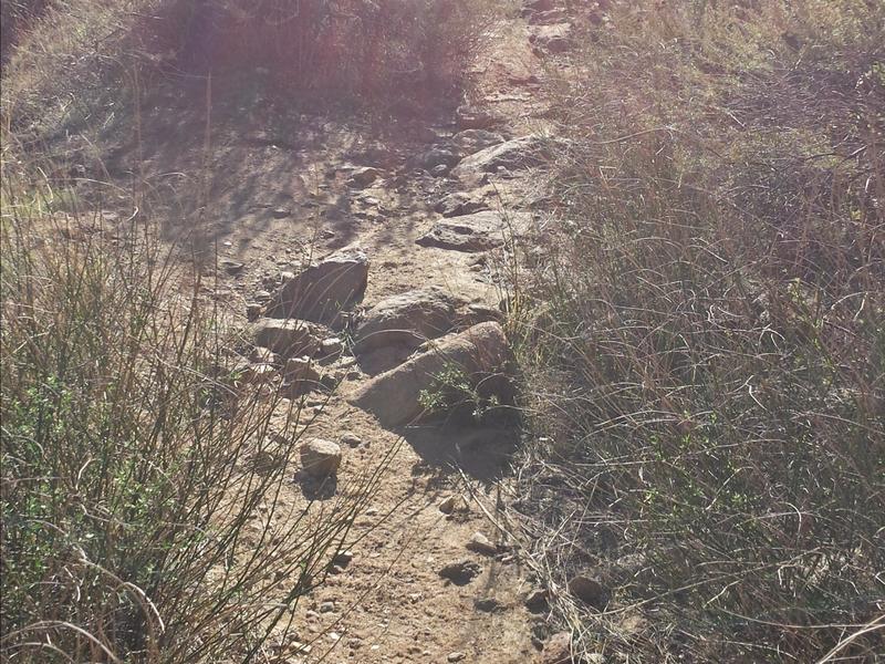 Singletrack climbing up Eagle Peak Road