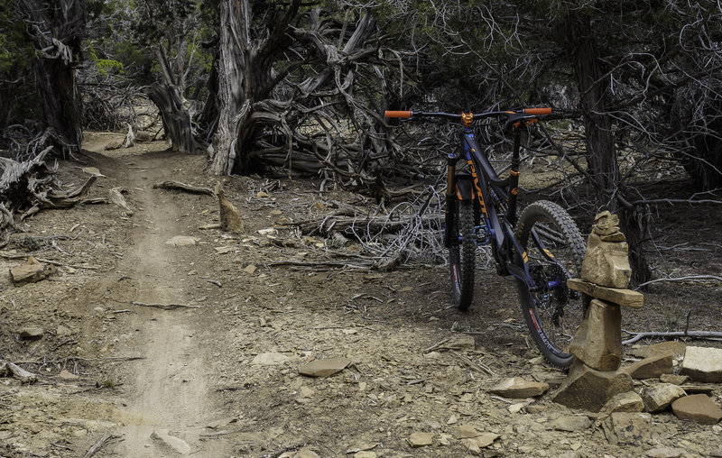 Some of the perfect singletrack on Slant N' Dicular.