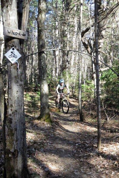 Riding through the pines.
