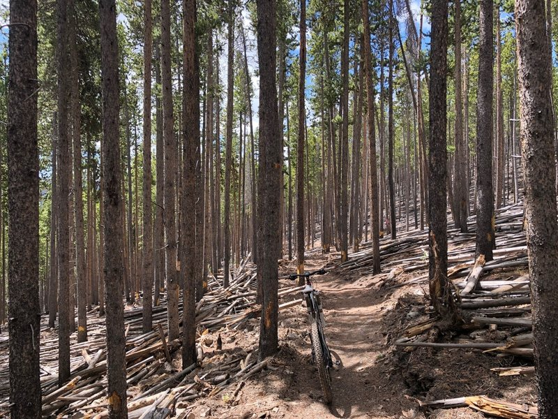 """""""Pick Up Sticks Forest"""" on Chaco's TenFoot Loop"""