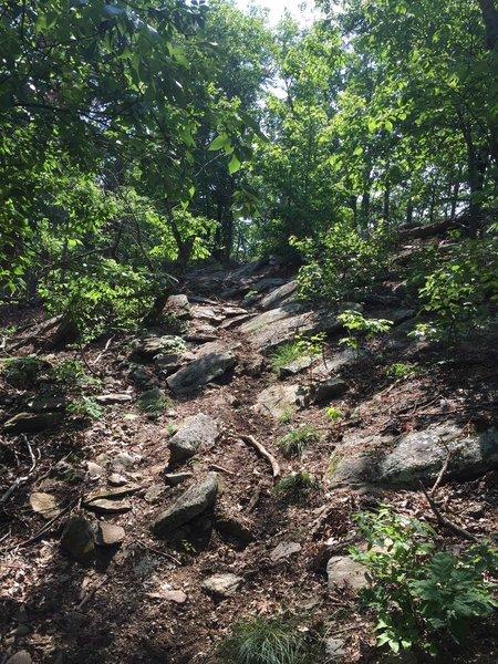Yep, that's the trail!