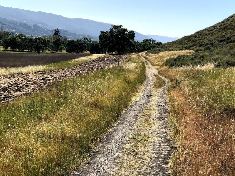 Eastern part of Calero Creek Trail.