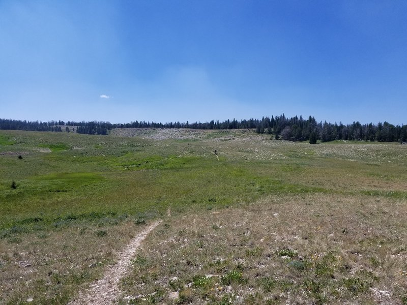 The narrow ribbon of singletrack on the blazing fast descent of First Yellow Mule.