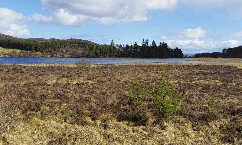 Loch Laide, Abriachan Forest Trust