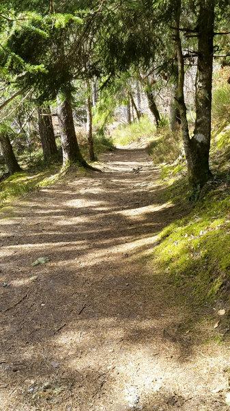 Gorgeous singletrack trails down to Invermoriston