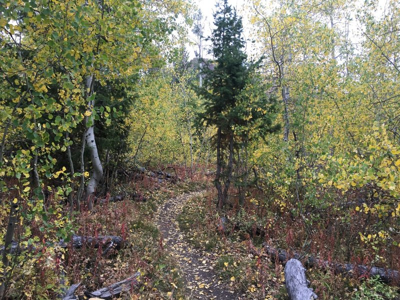 Aspen section on the south end of Red Warrior in the fall.