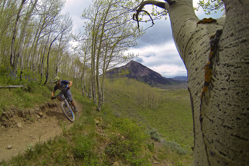 Aspen trees, Mount Crested Butte, and an awesome trail.
