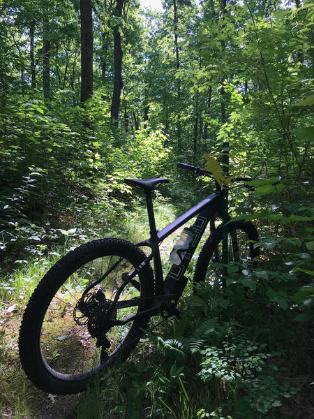 Wildcat trail is marked by yellow trail markers. See by right handlebar