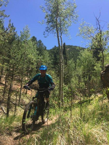 Aspen groves everywhere back here