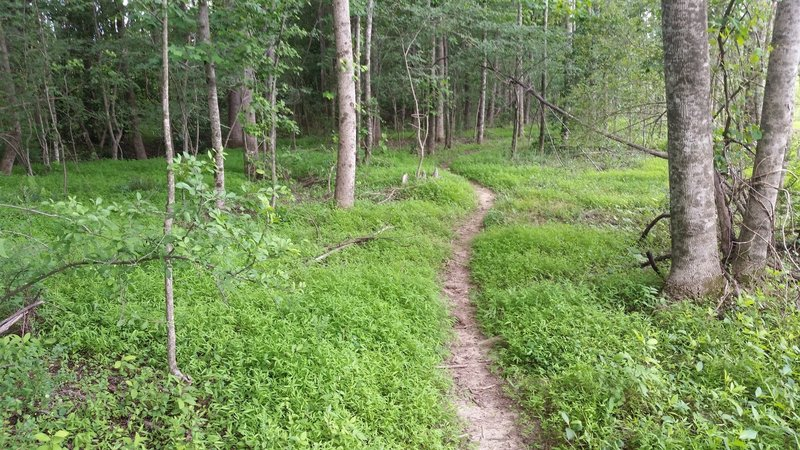 Simple trail through the woods!