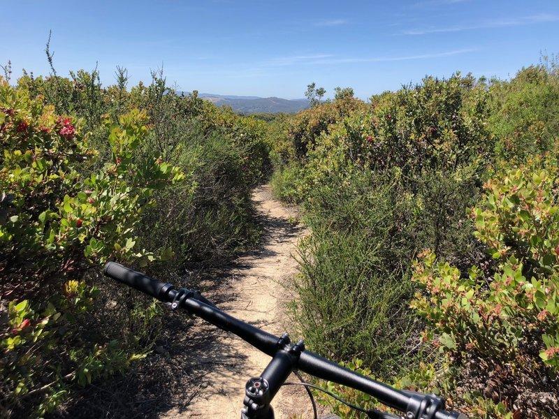 trail 50 cont'd..
