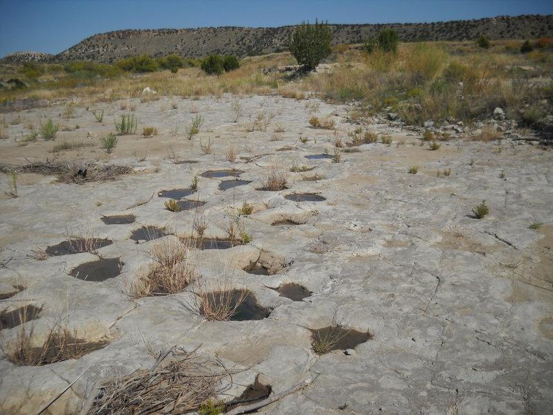 Purgatory Canyon dinosaur tracks
