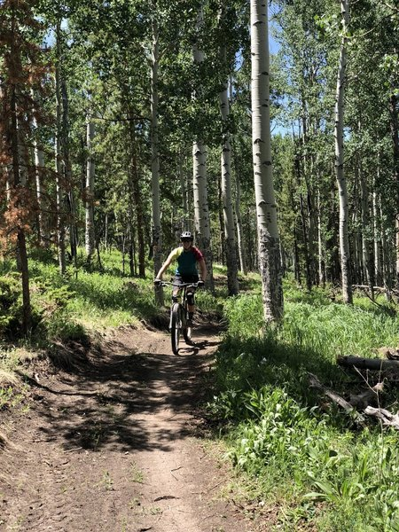 Cruising through the aspens on a freshly cut trail