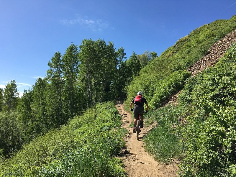 Mid Mountain trail is nice singletrack that is mostly undulating terrain.