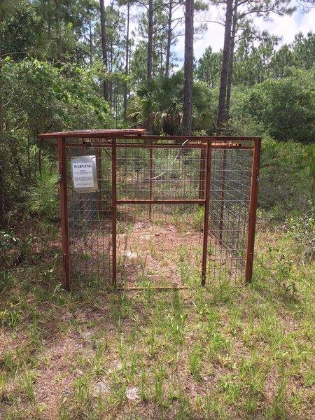 Bear trap?
