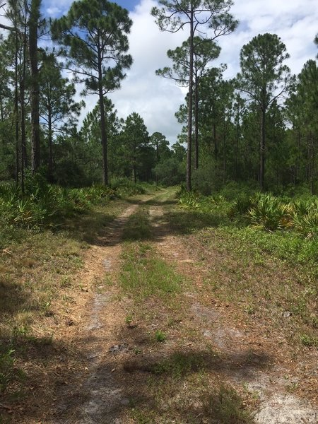 Typical road/trail in the preserve