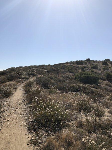 Singletrack ascent.