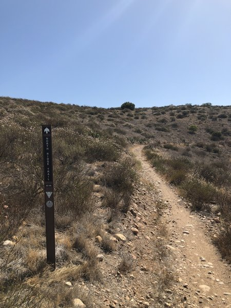 Singletrack ascent and still climbing.