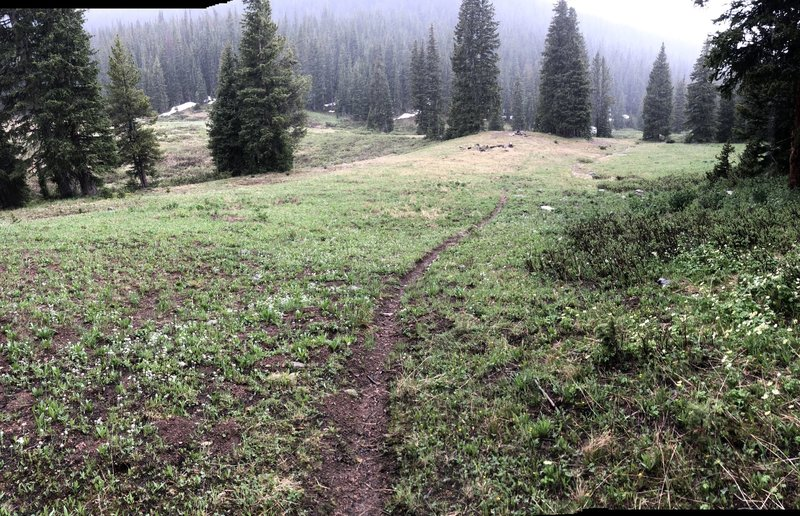 Nice singletrack through meadow