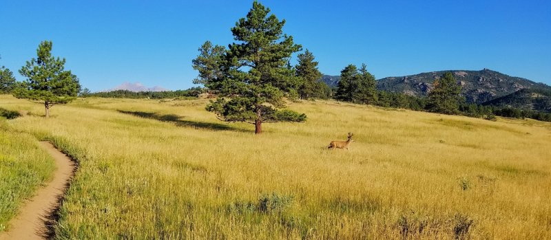 Longs Peak and Mt Meeker (and sometimes deer) come into view during this section of Nelson Loop.