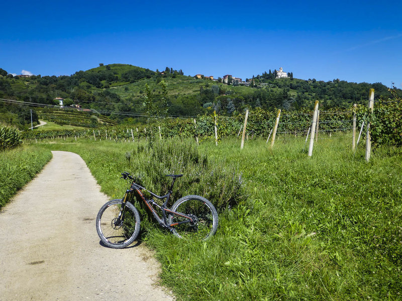 Typical Italian vineyard and villa