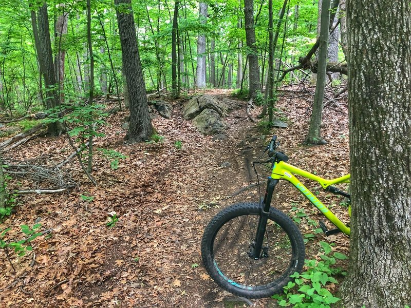 Last drop on the upper section of the coal road singletrack downhill. Is fun.