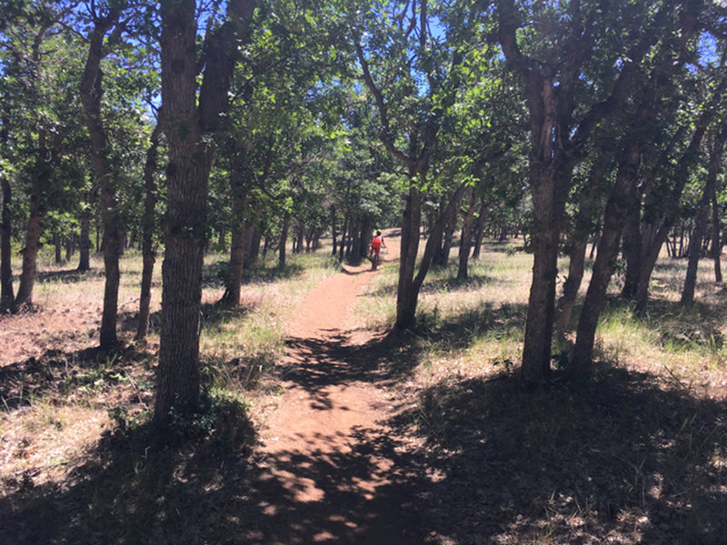 Kid's Trail