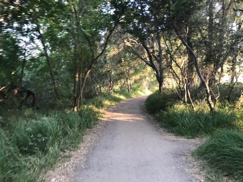 Dirt trail around Wilderness Area