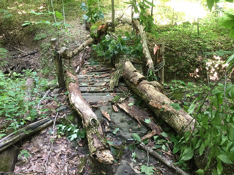 Tree down on Orange Loop trail (6/29/18)