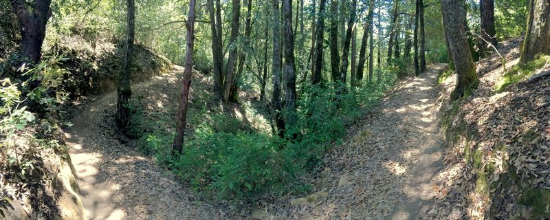 Forest in El Corte de Madera Creek Preserve.