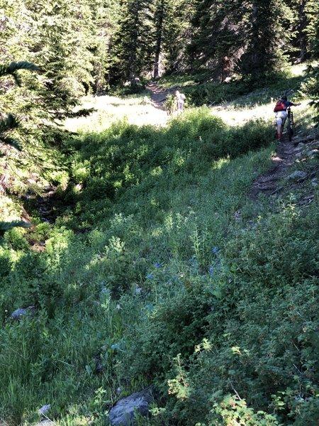 Pushing the bikes up through last steep grade on way to Arestua Mtn Hut