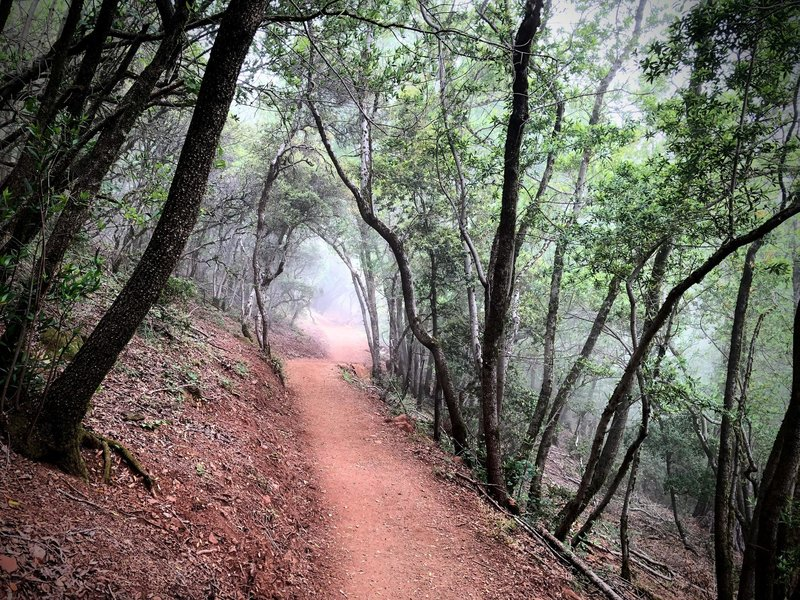 Mount Umunhum Trail in a cloud rolling over the mountain.