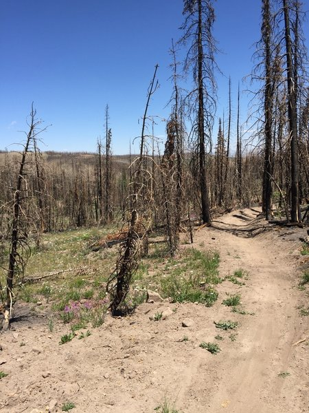 New trail after burn