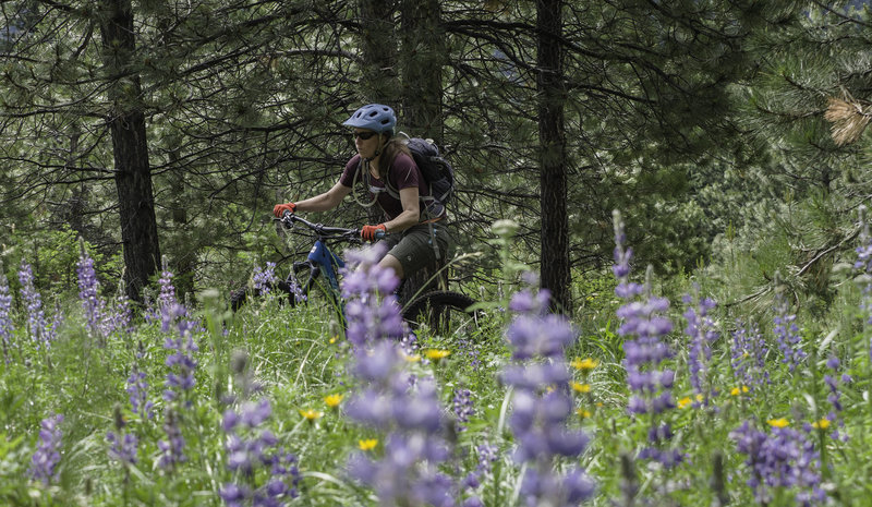 Enjoy the wild flowers as you climb the south flank of Mt. Helena.