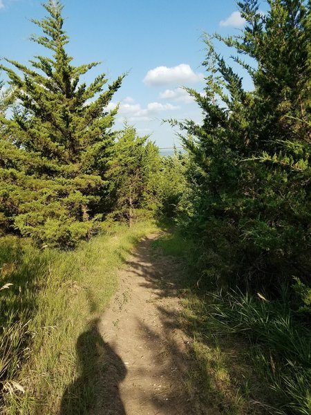 Opening to the foliage on the Branched Oak MTB trail.