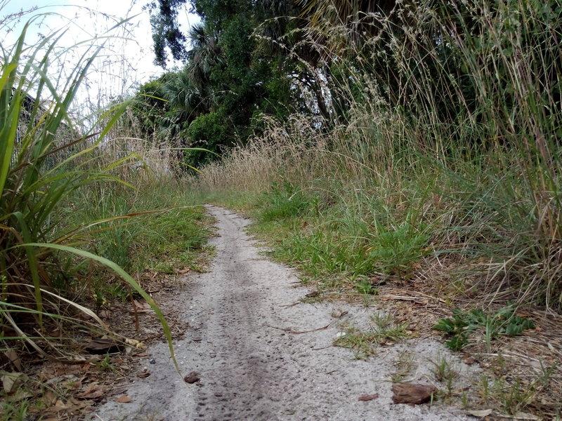Orlando Mountain Bike Park's trail exit.