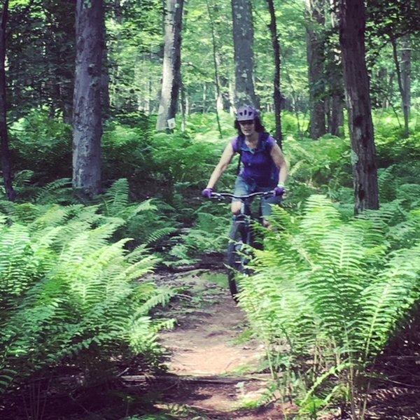 Lotsa ferns on Fern Trail.
