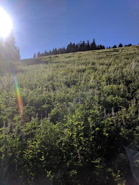 Crossing meadows on east side of Lake Peak.