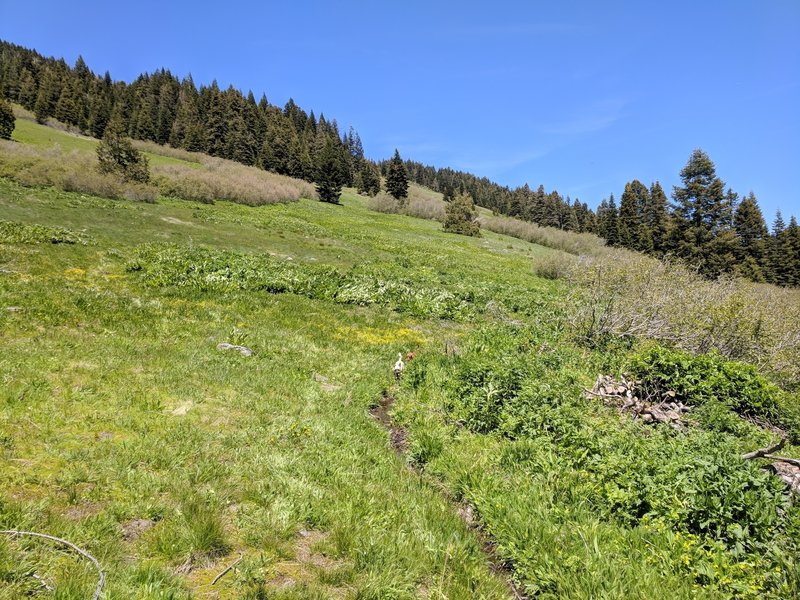 Starting across the meadows on the east side of Lake Peak.