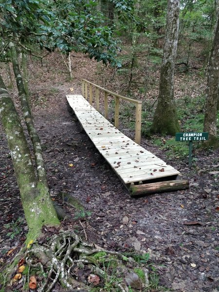 New boardwalk crossing built by Eastern Shore Cycles and Boy Scout Troop 82.