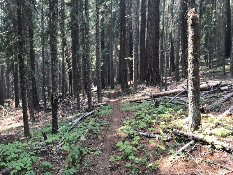 North Umpqua Trail as part of the Lake Lemola Loop