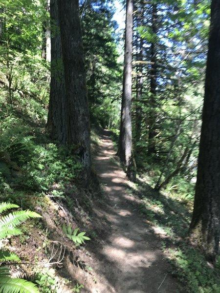 Heading into the trees