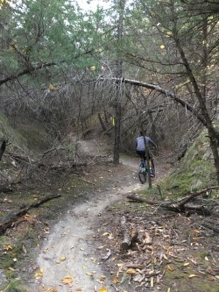 Pedaling up Wicked Ridge