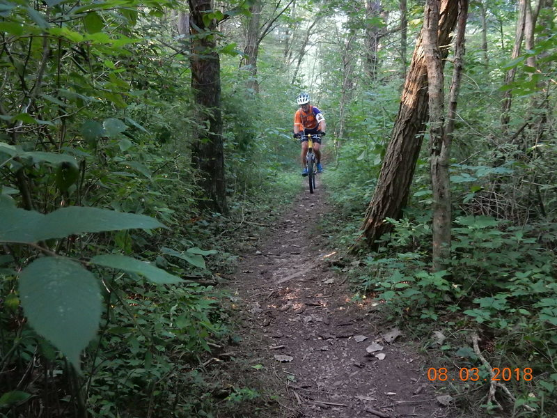 90% of the singletrack runs through the tree canopy of a mature forest.  This short section runs throught the pines.