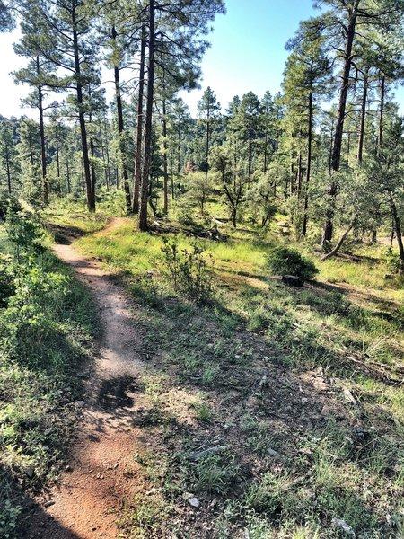 Heading towards Javelina Trail