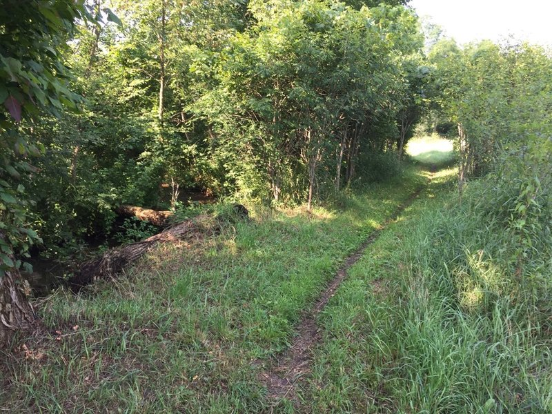 This section of the easy trail runs along a small creek. The singletrack at this point is hard packed.