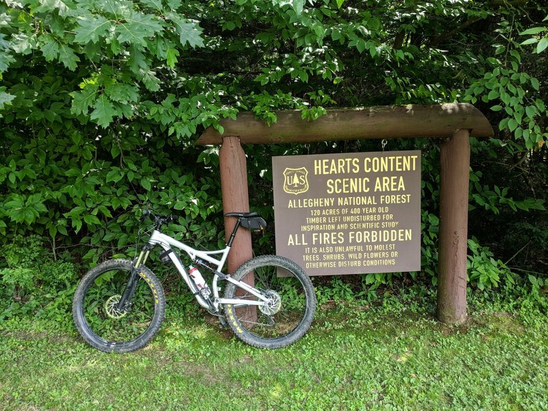 Hearts Content Scenic Area. Water is available at this picnic area.