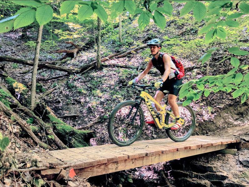 Bridge deep in the Yellowwood Forest
