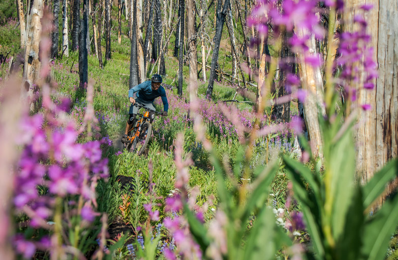 Summertime wildflowers on Osberg Ridge... so awesome!